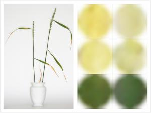 Botanica / Lumière Diffractée ©Ralph Samuel Grossmann